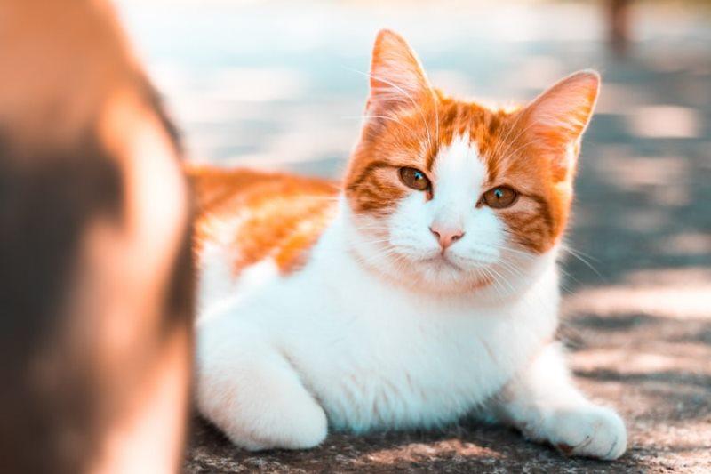 Nama Kucing Yang Paling Bagus 81021 Nama Untuk Kucing Comel Lucu Dan Unik
